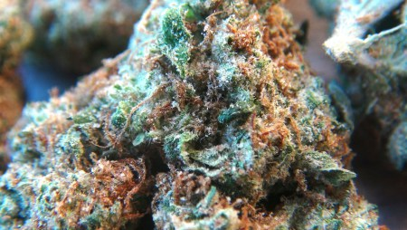 Variedades de marihuana más potentes